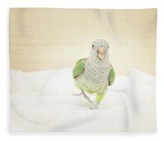 Quaker Parrot Fleece Blanket