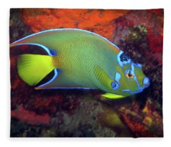 Queen Angelfish, U. S. Virgin Islands 2 Fleece Blanket