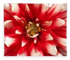 Radiant Dahlia Fleece Blanket