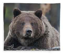 Raw, Rugged And Wild- Grizzly Fleece Blanket