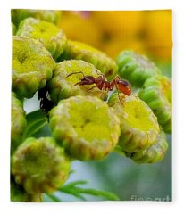 Red Ant Fleece Blanket