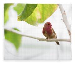 Red Bird Fleece Blanket