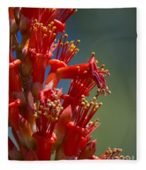 Red Cactus Flower 1 Fleece Blanket