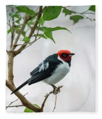 Red Capped Cardinal 2 Fleece Blanket