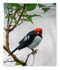 Red Capped Cardinal Fleece Blanket