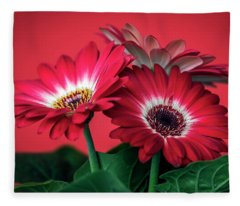 Red Daisies #5 Fleece Blanket