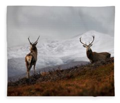 Red Deer Stags Fleece Blanket