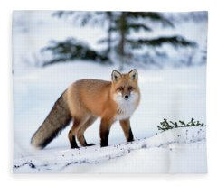 Red Fox Vulpes Vulpes Portrait Fleece Blanket