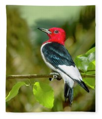 Red-headed Woodpecker Portrait Fleece Blanket