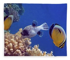 Red Sea Butterflyfish And Pufferfish Fleece Blanket