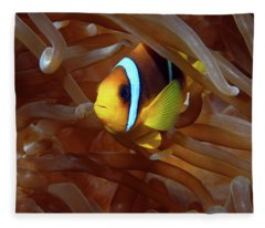 Red Sea Clownfish, Eilat, Israel 8 Fleece Blanket