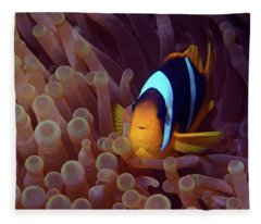 Red Sea Clownfish, Eilat, Israel 9 Fleece Blanket
