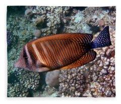 Red Sea Sailfin Tang 3 Fleece Blanket