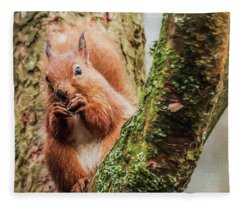 Red Squirrel, Feeding Fleece Blanket