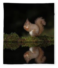 Red Squirrel Reflects Fleece Blanket