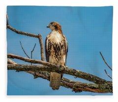Red Tail Hawk Perched Fleece Blanket