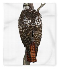 Red-tailed Hawk - Color Fleece Blanket