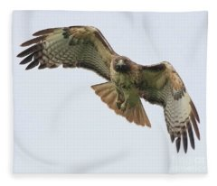 Red Tailed Hawk Finds Its Prey Fleece Blanket