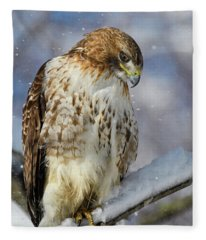 Red Tailed Hawk, Glamour Pose Fleece Blanket