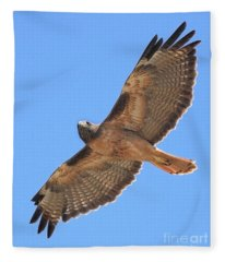 Red Tailed Hawk In Flight Fleece Blanket