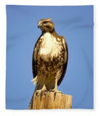 Red-tailed Hawk On Post Fleece Blanket