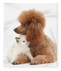 Red Toy Poodle And Kitten Fleece Blanket