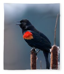 Red-winged Blackbird Singing Fleece Blanket