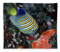 Regal Angelfish, Great Barrier Reef Fleece Blanket