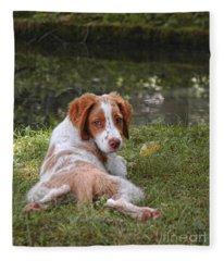 Resting Brittany Puppy Fleece Blanket