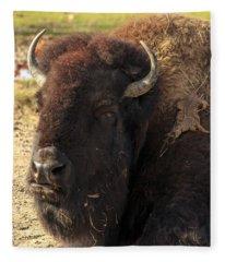 Resting Buffalo Fleece Blanket