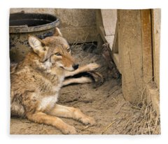Resting Coyote Fleece Blanket