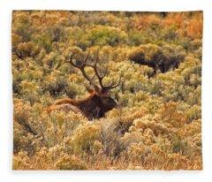 Resting Elk Fleece Blanket