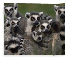 Ring-tailed Lemur Lemur Catta Group Fleece Blanket