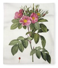 Rosa Carolina Corymbosa Fleece Blanket