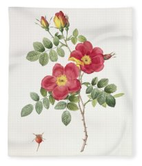 Rosa Eglantera Punicea Fleece Blanket