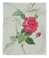 Rosa Indica Cruenta Fleece Blanket