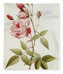 Rosa Indica Vulgaris Fleece Blanket