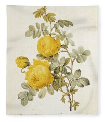 Rosa Sulfurea Fleece Blanket