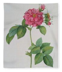 Rosa Turbinata Fleece Blanket