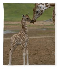 Rothschild Giraffe Giraffa Fleece Blanket