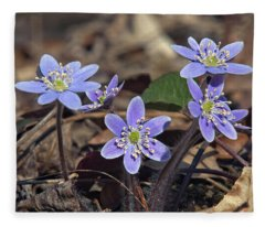 Round-lobed Hepatica Dspf116 Fleece Blanket