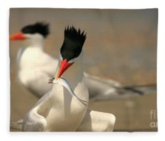 Royal Tern Catch Fleece Blanket