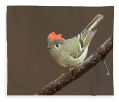 Ruby-crowned Kinglet Display Fleece Blanket