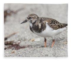 Ruddy Turnstone On The Beach Fleece Blanket