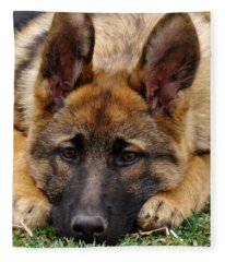 Sable German Shepherd Puppy Fleece Blanket