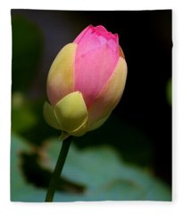 Sacred Lotus Bud 3 Fleece Blanket