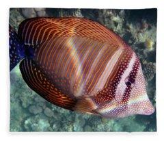 Sailfin Tang Makadi Bay Fleece Blanket