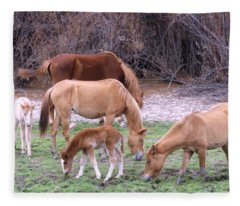 Salt River Wild Horses In Winter Fleece Blanket