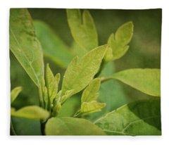 Sassafras Tree Fleece Blanket