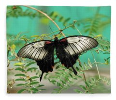 Fleece Blanket featuring the photograph Scarlet Swallowtail Butterfly -2 by Paul Gulliver